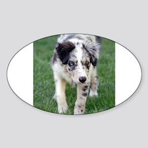 Border Collie Pupppy 4 Sticker