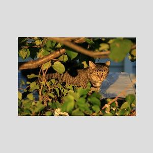 Cat in the Garden Rectangle Magnet