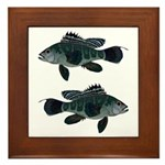 Black Sea Bass (Atlantic) Framed Tile