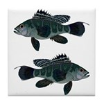 Black Sea Bass (Atlantic) Tile Coaster