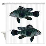 Black Sea Bass (Atlantic) Shower Curtain