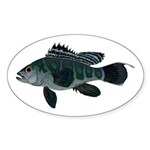 Black Sea Bass (Atlantic) Sticker
