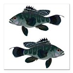 Black Sea Bass (Atlantic) Square Car Magnet 3