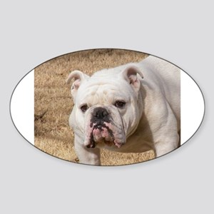 bulldog white Sticker