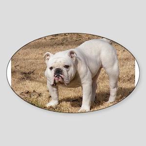 bulldog white full Sticker