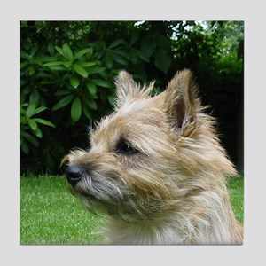 cairn terrier wheaton Tile Coaster