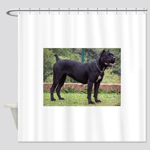 cane corso full Shower Curtain