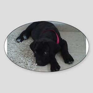 cane corso puppy Sticker