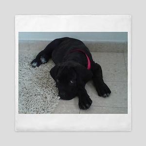 cane corso puppy Queen Duvet