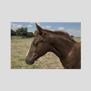 Beautiful Auburn Horse Magnets
