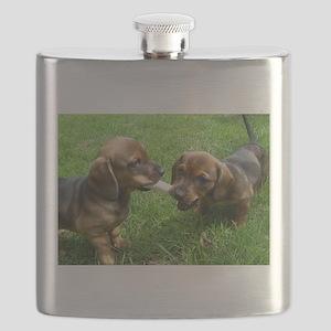 dachshund puppies Flask
