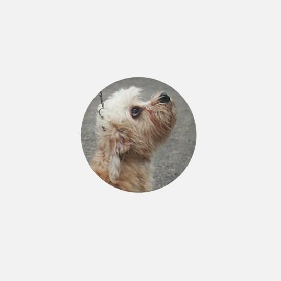 dandie dinmont terrier Mini Button