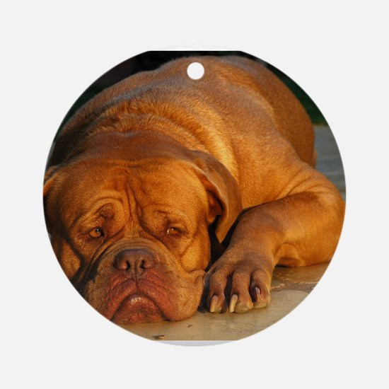 dogue de bordeaux Round Ornament