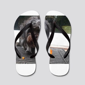 Kona Lhasa type dog eating a persimmon Flip Flops
