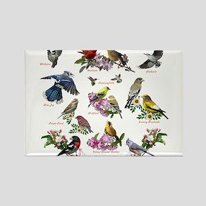 12 X T birds copy Magnets