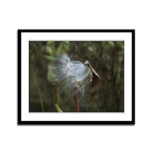 Fall Milkweed Framed Panel Print