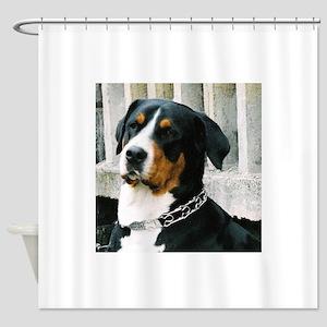 greater swiss mountain dog Shower Curtain