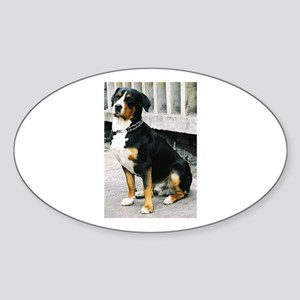 greater swiss mountain dog sitting Sticker
