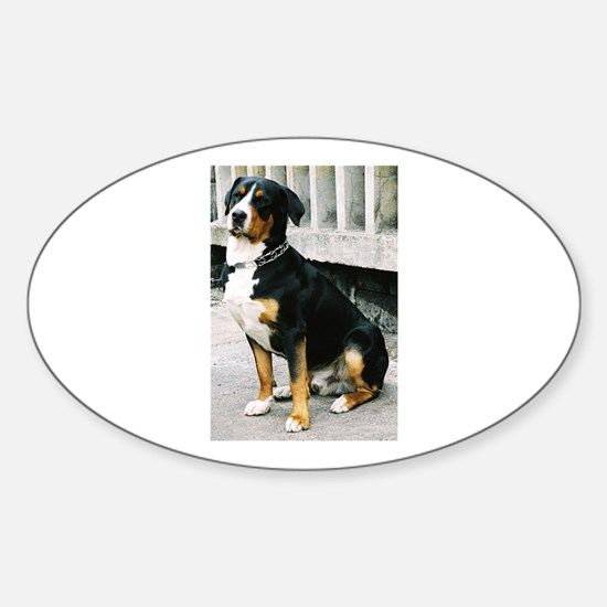 greater swiss mountain dog sitting Decal