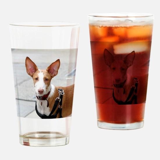ibizan hound Drinking Glass