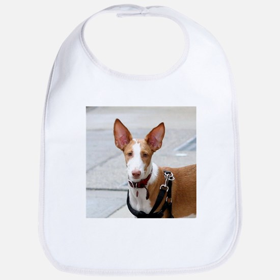 ibizan hound Bib