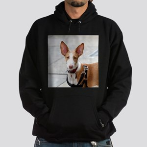 ibizan hound Hoodie