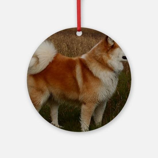 icelandic sheepdog full Round Ornament
