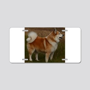 icelandic sheepdog full Aluminum License Plate
