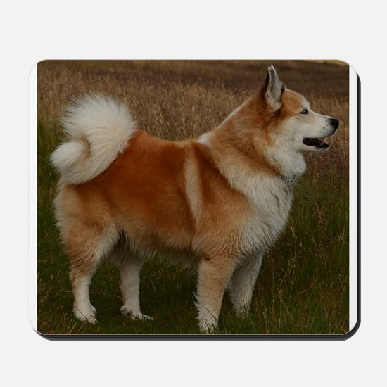 icelandic sheepdog full Mousepad