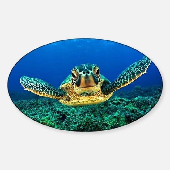Sea Turtle Decal