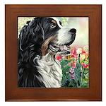 Bernese Mountain Dog Painting Framed Tile
