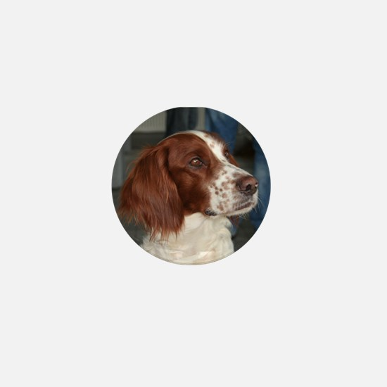 irish red and white setter Mini Button