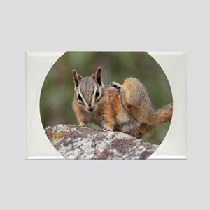 Itchy Chipmunk Magnets