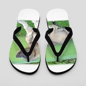 irish wolfhound puppy Flip Flops