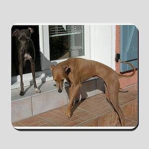 italian greyhound group Mousepad