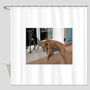 italian greyhound group Shower Curtain