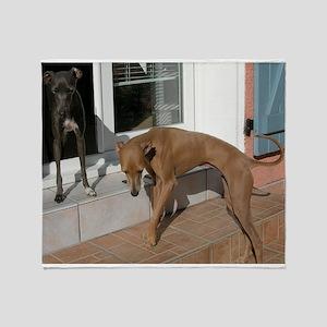 italian greyhound group Throw Blanket