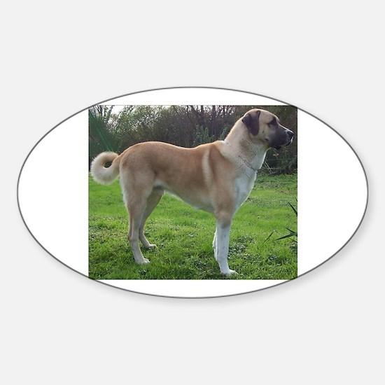 Anatolian Shepherd Dog full Decal