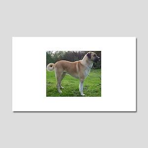 Anatolian Shepherd Dog full Car Magnet 20 x 12