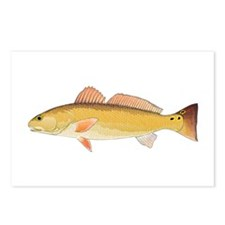 Redfish Red Drum Postcards (Package of 8)