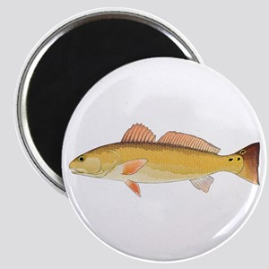Redfish Red Drum Magnets