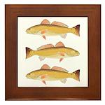 Redfish Red Drum Framed Tile
