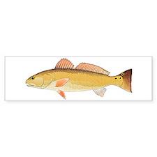 Redfish Red Drum Bumper Sticker