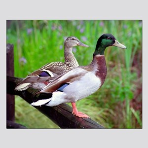 2 Mallards On a Fence Small Poster