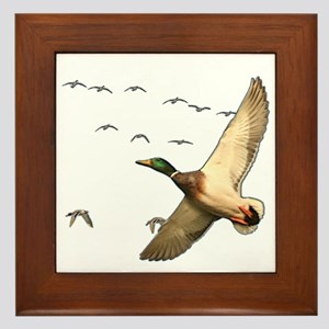 Mallard ducks Canadian geese Framed Tile