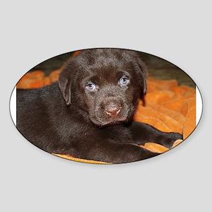 labrador retriever chocolate puppy Sticker