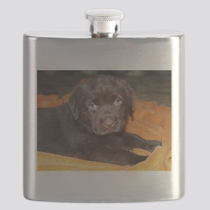 labrador retriever chocolate puppy Flask