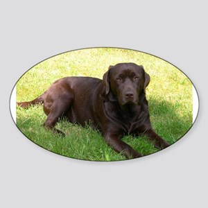 chocolate lab laying Sticker