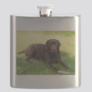 chocolate lab laying Flask