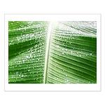 Plantain Leaf Small Poster Hoja de Platano